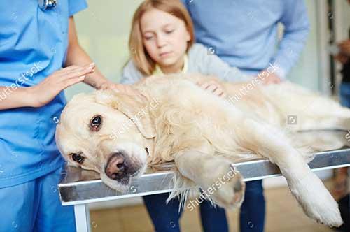 Chó tiêu chảy đơn thuần