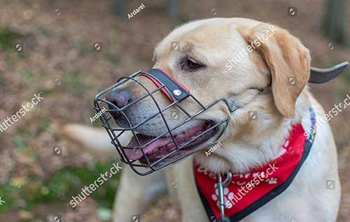 Ngăn chặn chó cắn bậy