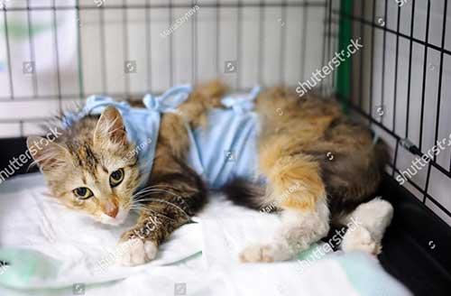 Mèo nôn ói tiêu chảy