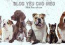 Các Giống Chó Cảnh, Chó Kiểng Đẹp Và Phổ Biến Tại Việt Nam